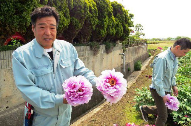 Японские гости вновь привезут в Хабаровск древовидные пионы