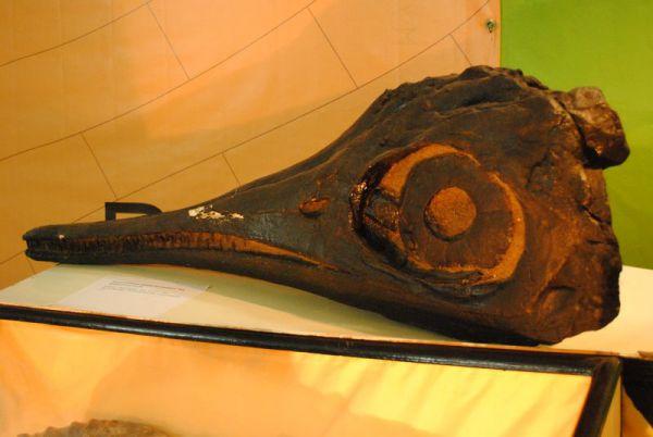 Тот самый «глазастый» ихтиозавр - офтальмозавр, которого назвали «Ленин блистательный»