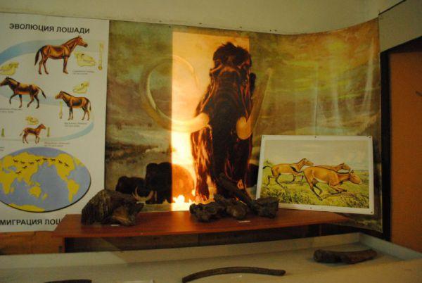 Вымершие млекопитающие тоже представлены в экспозиции.