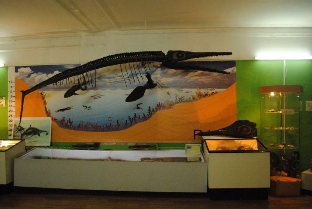 Ихтиозавры - ящеры, похожие на рыб или дельфинов.
