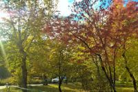 В Омск пришла золотая осень.