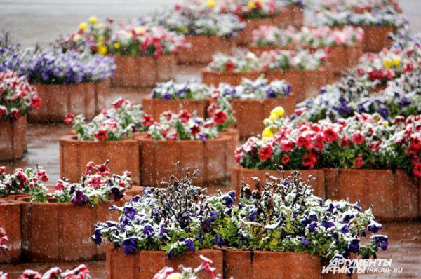 Переживут ли цветы первый морозный день?