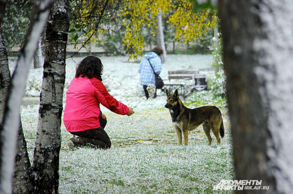 В такую погоду редкий хозяин выгонит собаку из дома. Но гулять надо.