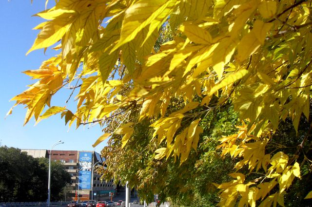 Каждый год осень добавляет разные краски в пейзажи Кемерова.