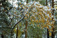 В Омске выпал первый снег