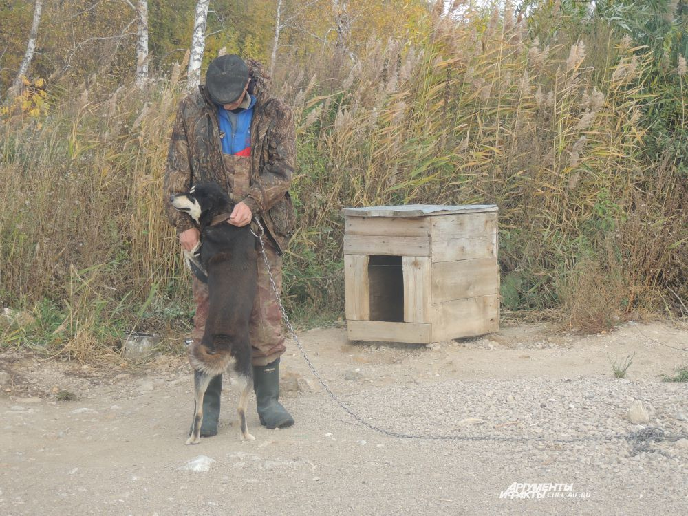 На озере Синеглазово живет самый верный пес в мире.