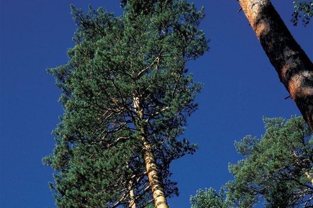 Средства от продажи российского леса не вернулись на родину.