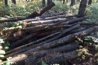 Эти остатки пролежали в лесу больше года, вопреки положению Лесного кодекса.