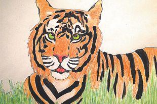 тигр картинки рисунки