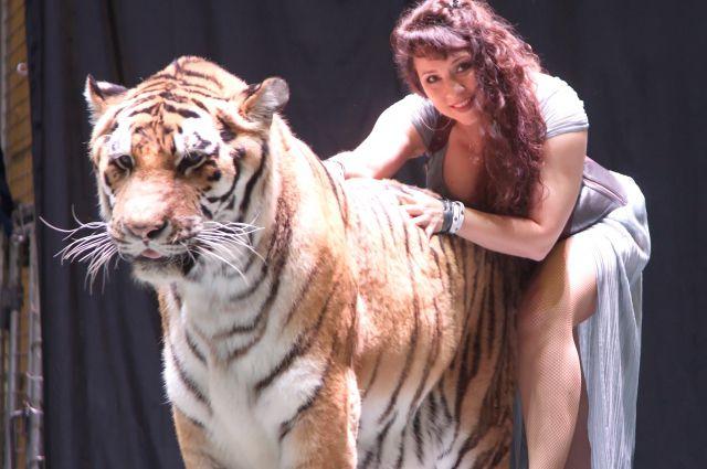Работа с тиграми закалила характер.