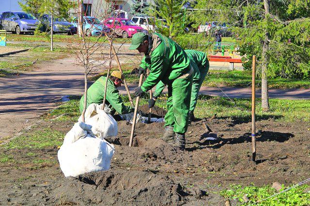 6 тыс. деревьев высадили в Омске в 2015 году.