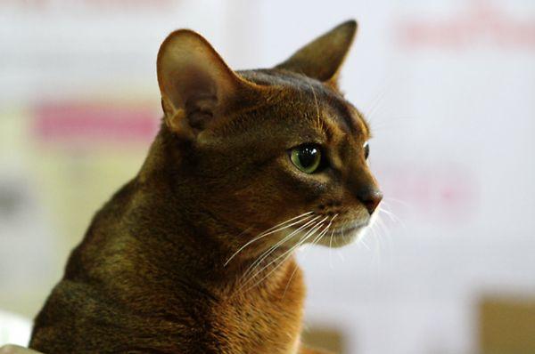Самые серьёзные коты напряжённо наблюдают за конкурентами, изучая их основные «фишки».