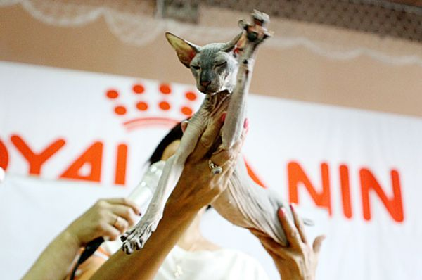 Победителей не судят, а любой выигрыш достоин уважения. Даже, если речь идёт о кошках.