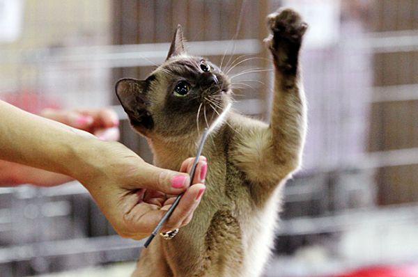 Кошка - существо нежное и игривое.