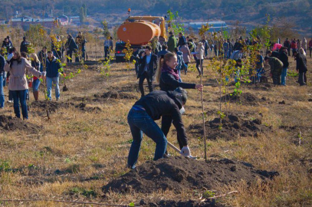 На территориях городских лесов в границах Железнодорожного и Пролетарского районов Управление благоустройства и лесного хозяйства выполнило работы по посадке 4476 деревьев.