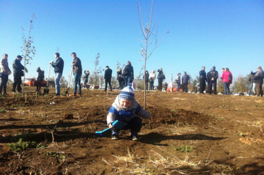 Жители Ростова - трудовые коллективы, общественные организации, семьи, вышли  на субботник по благоустройству, чтобы озеленить город.