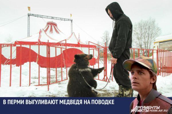 Осенью многие жители мкр Гайва не раз становились свидетелями, как мужчина на поводке выгуливал по улицам медведя. Оказалось, животное ездит по всей стране с передвижным цирком.