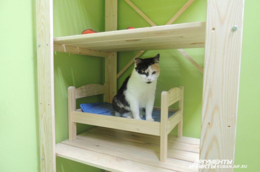 Домики и когтеточки любимые места отдыха кошек «ТерраКОТа».