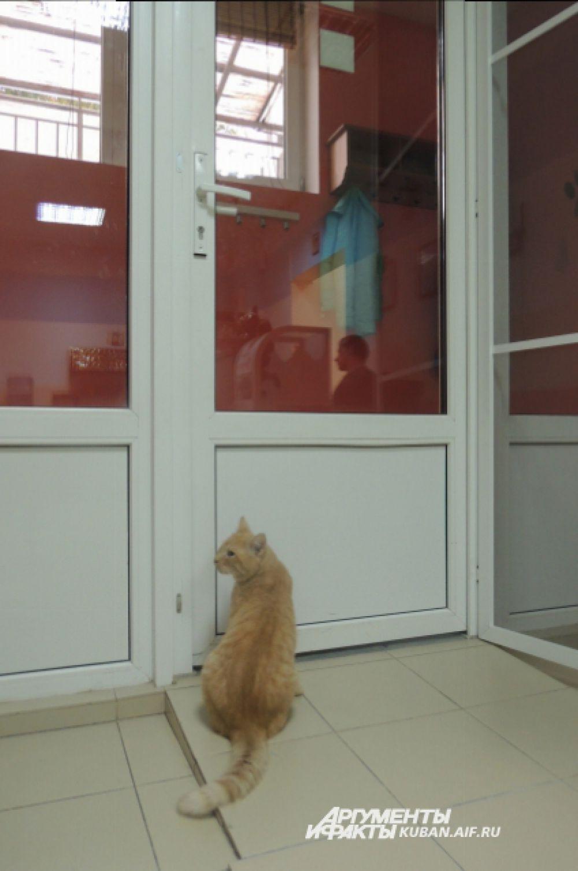 Так рыжий Кекс провожает особенно понравившихся ему гостей, а может быть, выглядывает свою новую семью. Никто никогда не узнает, о чем в такие моменты думает кот.