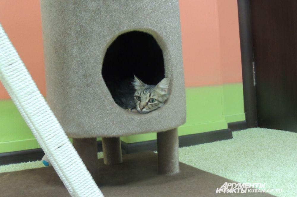 Кот Торакс наблюдает за гостями из домика.