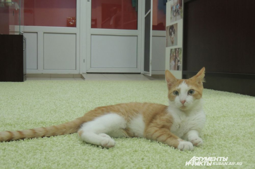 Лео с интересом разглядывает новых гостей. Коту всего 4 месяца. Он самый молодой житель антикафе.
