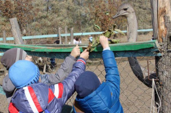 С берегов Дона обитателей страусиной фермы скоро перевезут в город Горячий Ключ Краснодарского края.