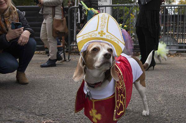 Собака в костюме Папы Римского.