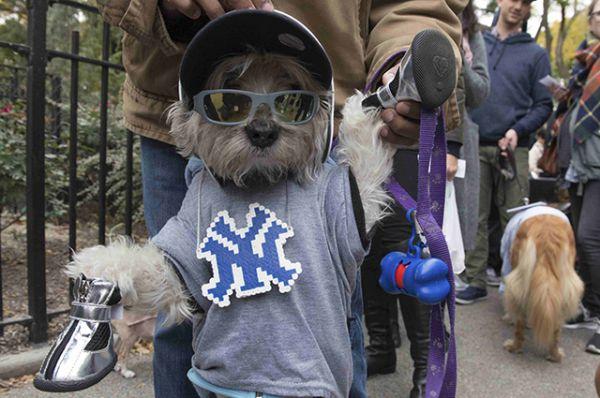 Собака, болеющая за «Янкиз».