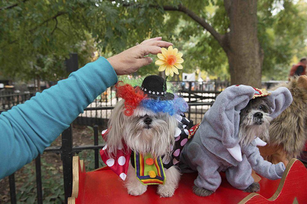 Собаки-цирковые животные.