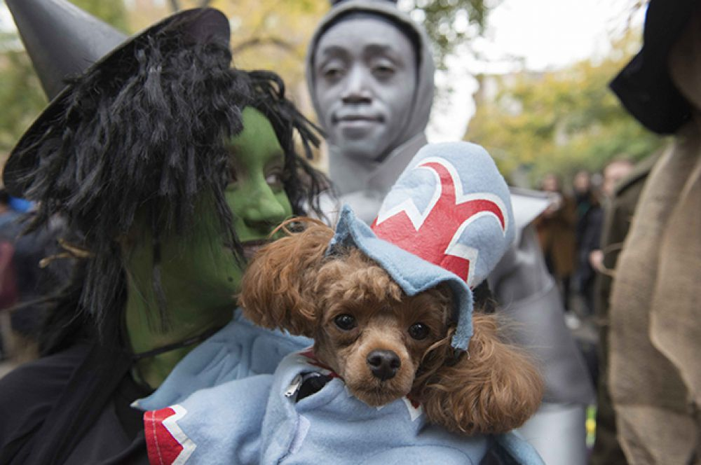 А это злая ведьма из той же сказки и ее собачка в костюме Летучей Обезьяны.