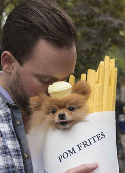 Собака в костюме картошки-фри.