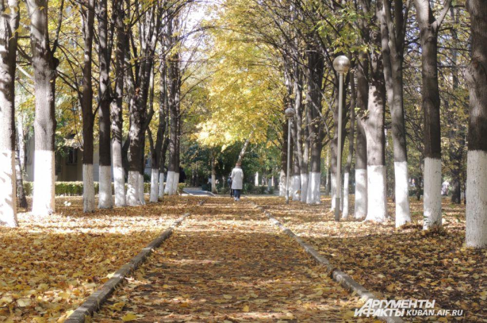 Наслаждаться осень нужно, гуляя именно по таким аллеям.