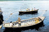 Неужели лодки, полные рыбы, остались только на старых фото?