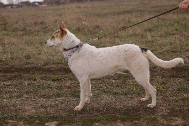 Собаками будет запрещено гулять без намордника и поводка.