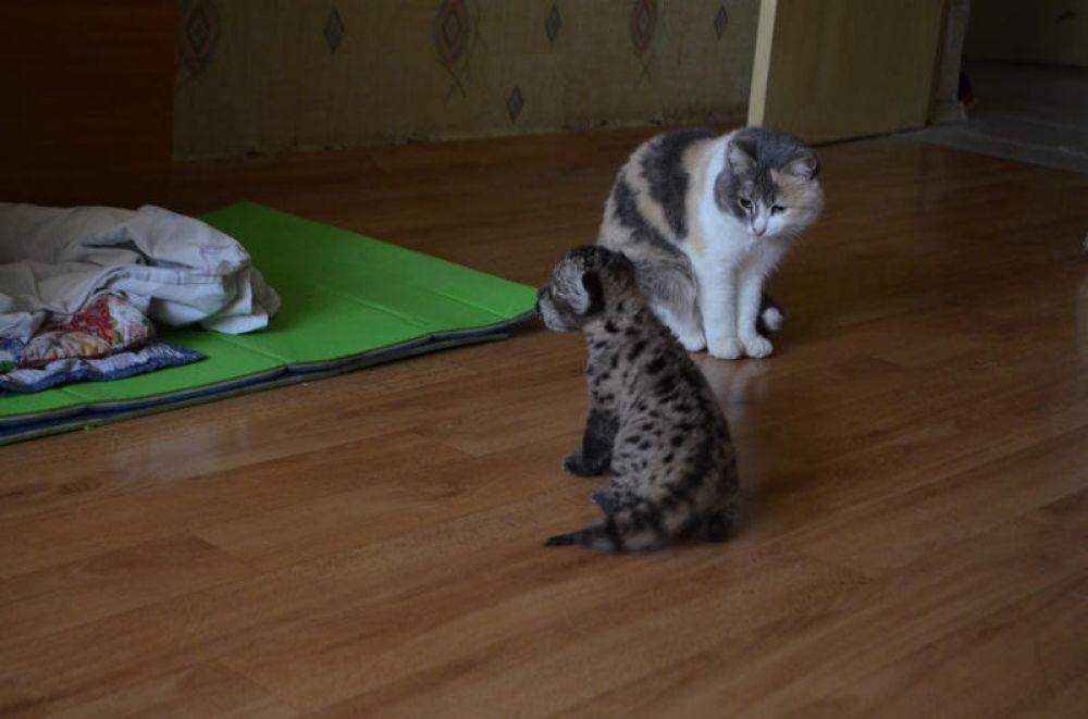 Не прошло и недели, как она начала метаться по квартире и резво играть с новыми приятелями – кошкой и собакой.