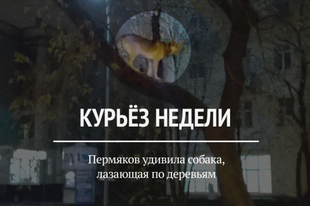 На этой неделе в сети появилось фото собаки, которой удалось самостоятельно забраться на дерево. По словам автора снимка, животное сделало это после команды хозяина.