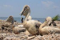 Ежегодно омские учёные насчитывали около 400 птиц.