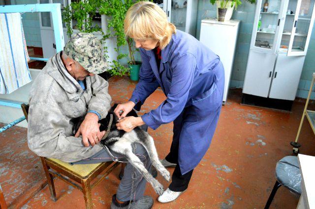15-20 пациентов приводят к ветеринару в обычный рабочий день.