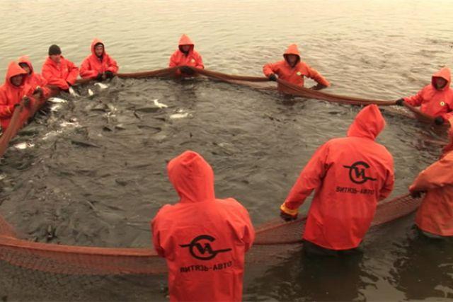 Отгружено рыбных товаров на сумму около 34 миллиардов рублей, выпущено 462 тысячи тонн рыбной продукции.