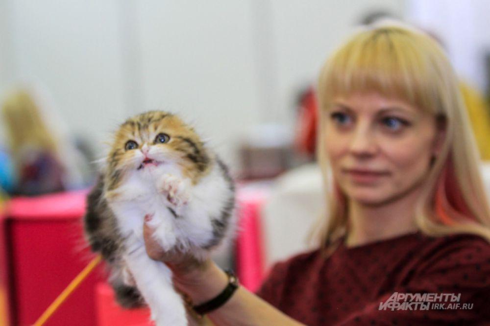 Эксперт из Германии тоже дал высокую оценку и попросил завдочицу продать ему котенка для развода на родине.
