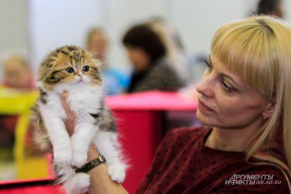 И заводчики изрители негласно признали его самым милым котенком, которого когда либо выставляли в Иркутске.