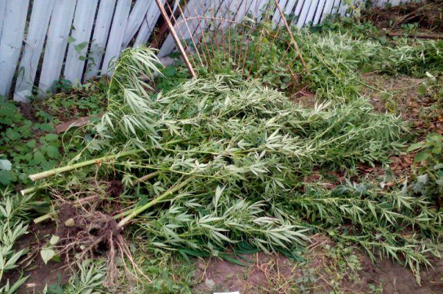 Рядом с полем конопли наркодельцы оборудовали полноценную стоянку.