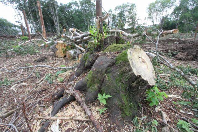 Общий объем незаконно вырубленных лесных насаждений составил более 11 тысяч кубометров.