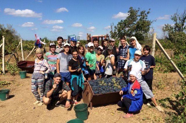 Шесть тонн винограда в смену - наши ребята оказались знатными ягодниками.
