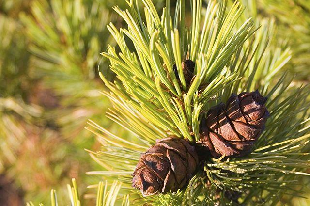 Озеленение планируют завершить к июню 2016 года.