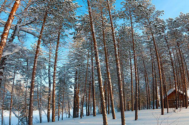 Прогноз погоды на декабрь в хабаровске