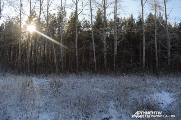 Этот таинственный и густой лес находится совсем рядом с поселком. По ошибке его можно принять за знаменитый «космический лес», но это всего лишь небольшая роща.