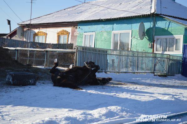 Согласно народной примете, когда кони барахтаются на снегу – быть буре.