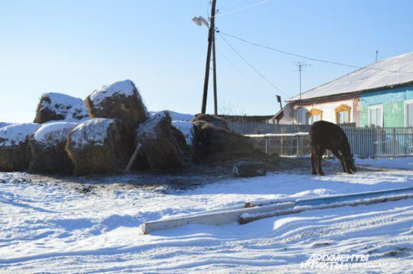 Кони в деревне нужны и полезны. На них можно и до ближайшей деревни по делам добраться, и коров пасти.