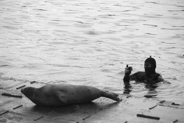 Случайно заплывший в Золотой Рог тюлень спасается от грязи на суше.